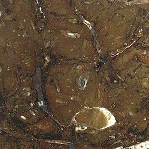 fossil morrone