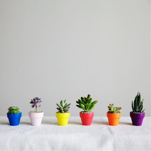 TO KEEP THEM CHEERY: Cute mini plants in hand-painted terra cotta pots from The Sill. Because society frowns upon year-round holiday decorations. Bah, humbug. (Liz loves the geometric pots they come in. Who can resist?)