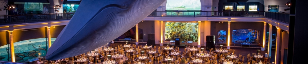 American Museum of Natural History Young Members' Gala (Coming Soon)
