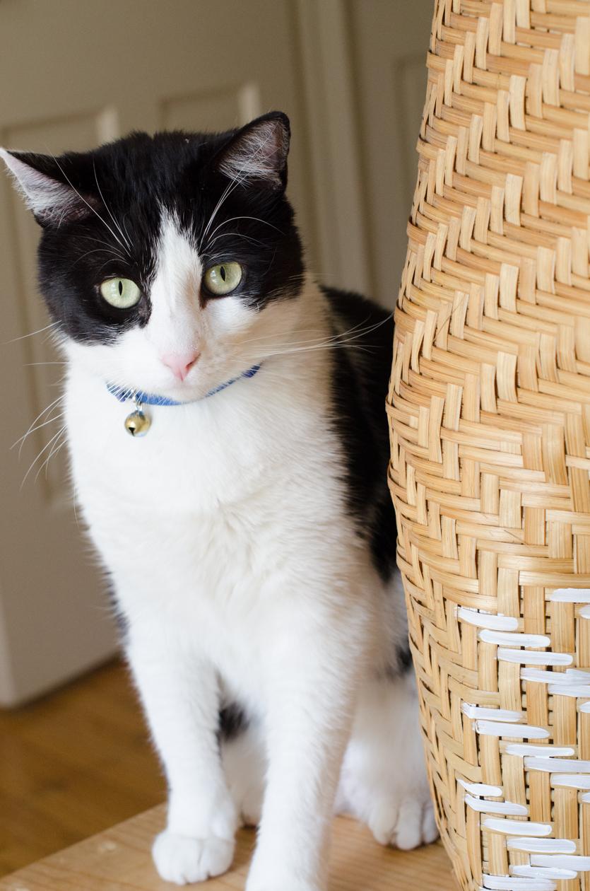 Christie-Cook-Den-Mother-rattan-DIY-Ikat-plant-holder-Los-Angeles-design-cat
