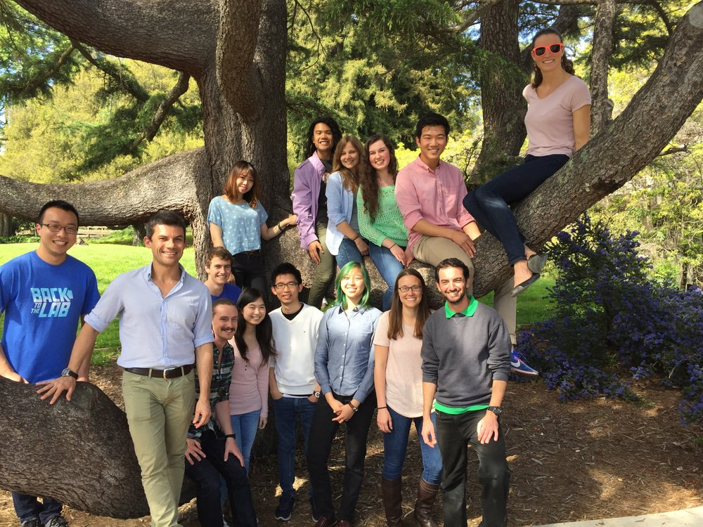 Z-Lab, March 2017: First row:  Kelvin Cho, Roberto Zoncu, Oliver Davis, Jiayi Luo, Chun-Yan Lim, Ann Deng, Ashley Thelen, Ofer Moldavski.  Second row:  Eric Schade.  On the tree:  Yangxue Fu, Brian Castellano, Ronja Rappold, Emma Sydir, Justin Zhang, Rosalie Lawrence.