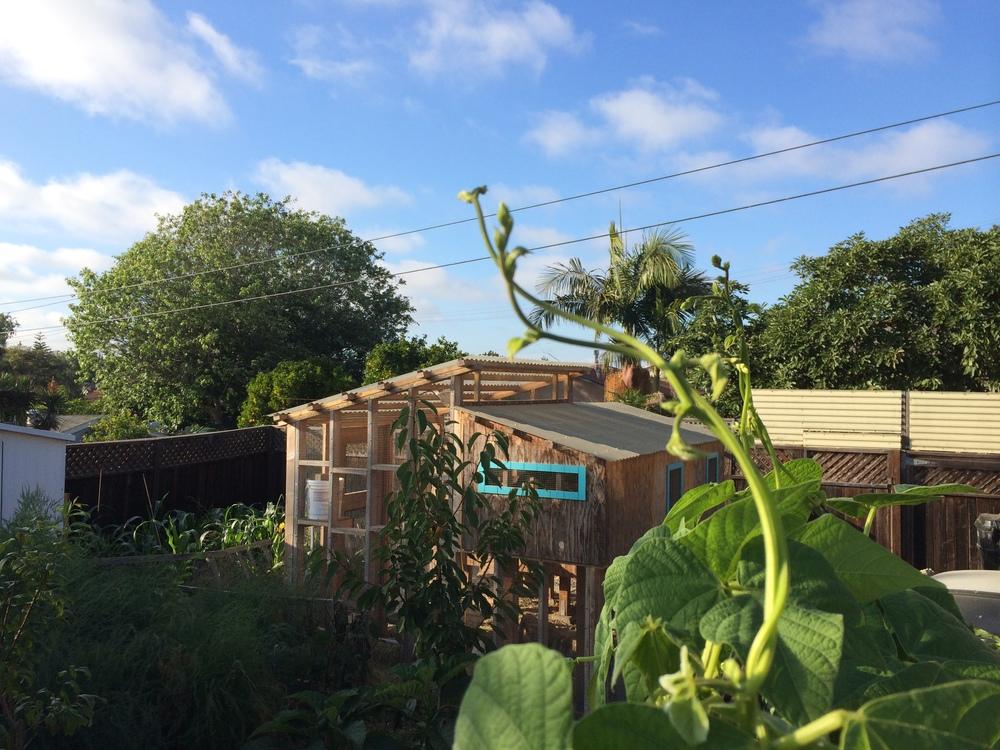 Beans overlooking 107 Garden's 3-level henhouse