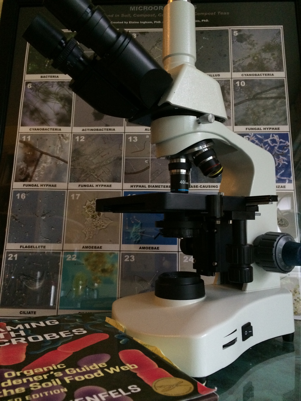 With an inexpensive microscope and a little attention to morphology you can assess your soil's health!
