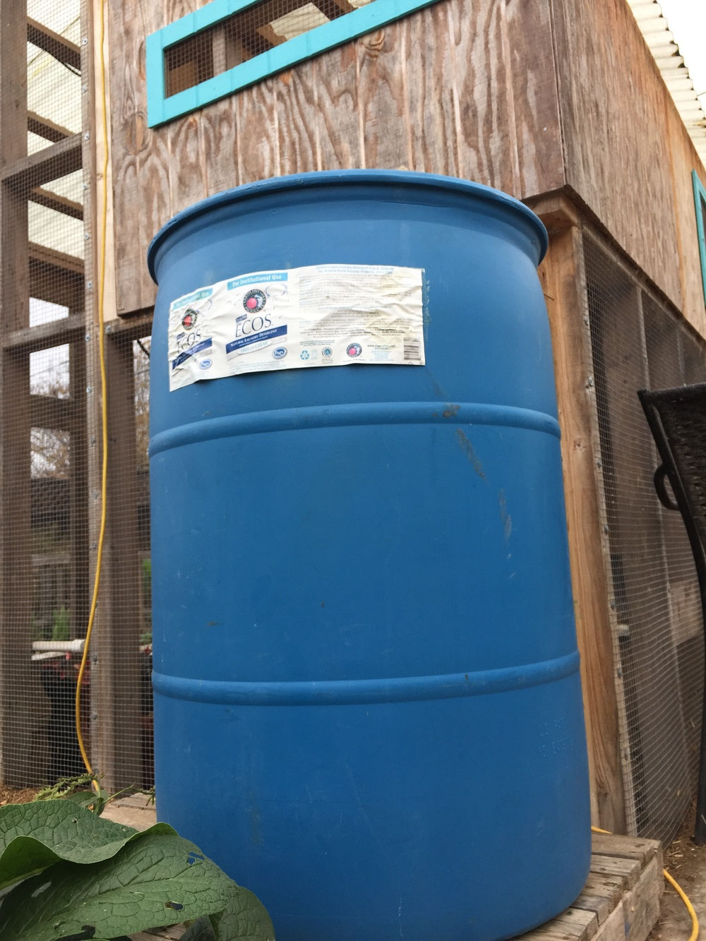 55-gallon barrel dreaming of catching water off the hen house roof