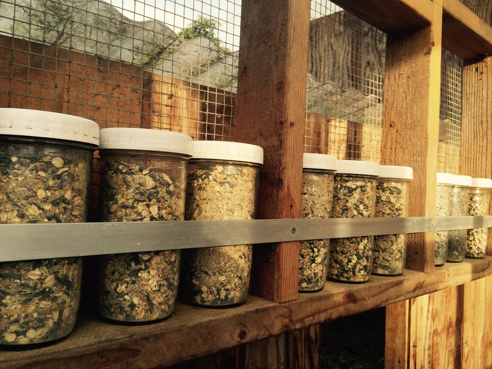 Pre-measured chicken feed helps the helpers not overfeed the flock