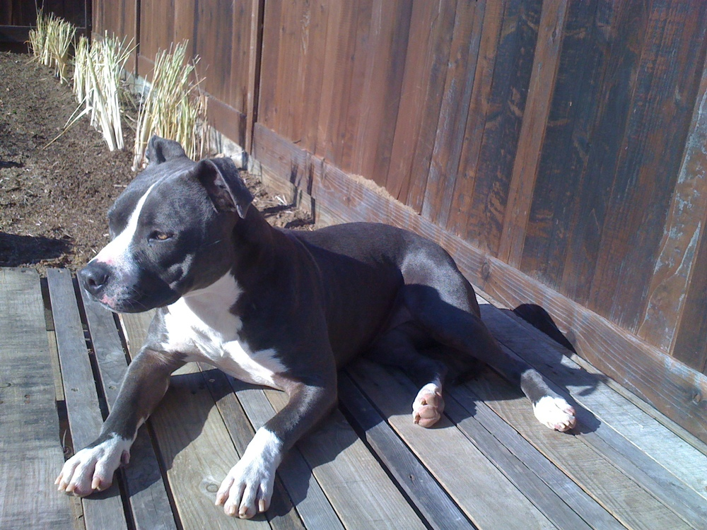 roxy on her custom made deck. Dale used a pallet to create a place for roxy to enjoy the garden. chillin'!
