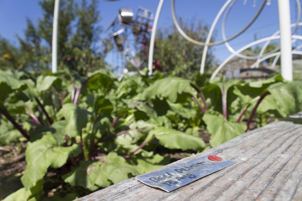 Detroit beets at 107 Garden photo credit: Robin Erler