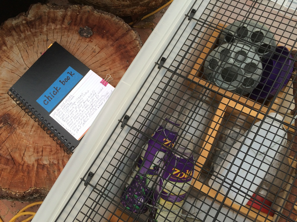 Chick book along with the brooder boxes and supplies