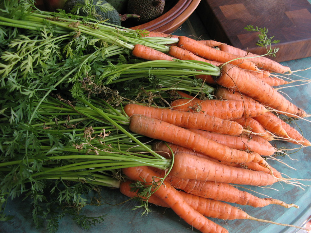 carrots. plant more than one variety! Find out which one you like best!