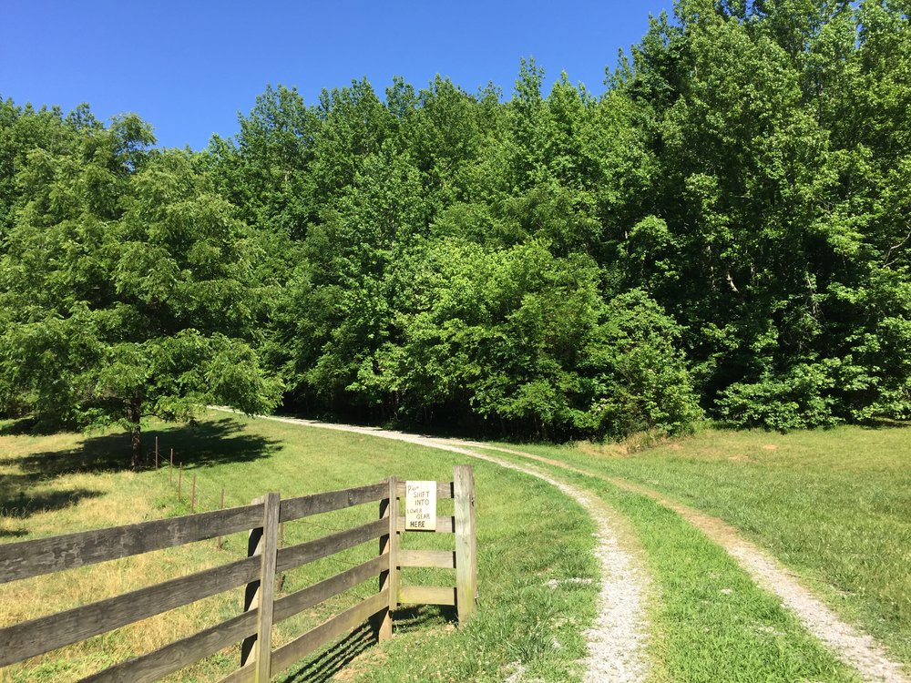I traveled to MIddle Tennessee to view this property. this is driveway to our new homestead. June 2016.