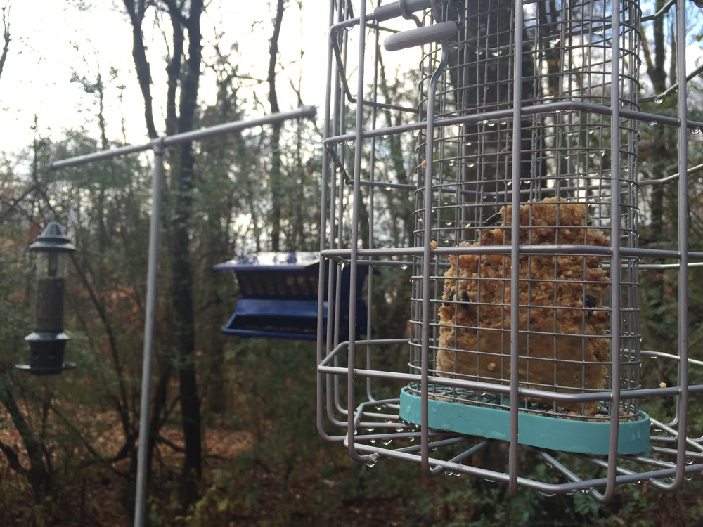 There are plenty of suet feeders options! You can even make simple cages or use logs. Since wildlife is abundant and I don't want all the feed scooped up by squirrels and nocturnal visitors, we opted for a couple of these hexi-haus caged suet feeders.