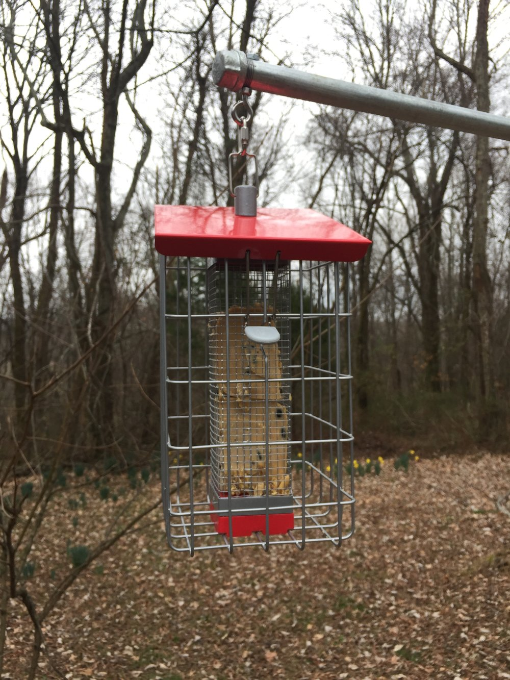 Geohaus peanut feeder is terrific for peanuts or suet.