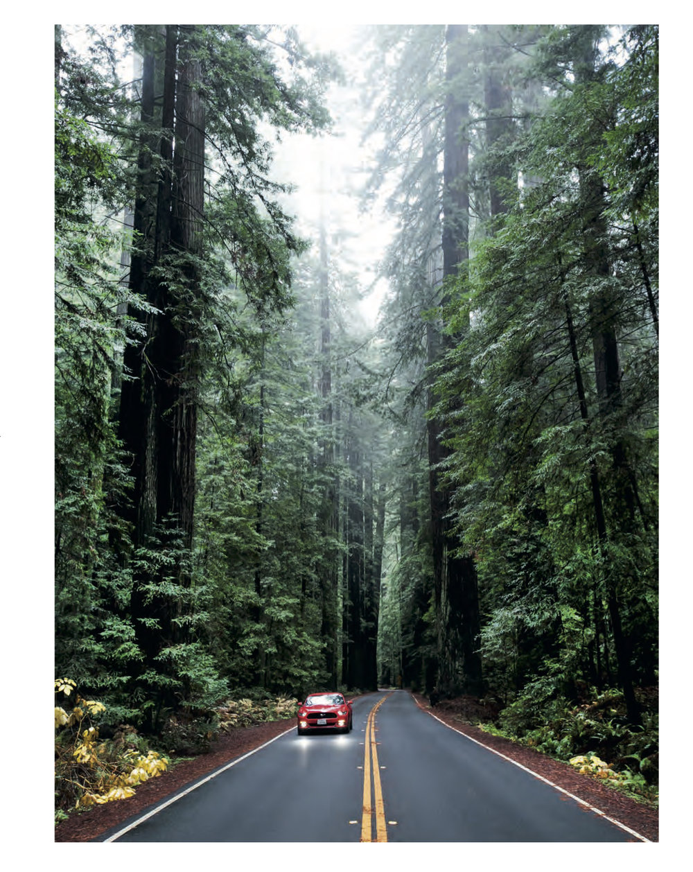Encounter With Coastal Giants      Conde Nast Traveler China   For the centennial of the US National Parks Service, I went deep into the redwoods—Redwood National Park—to discover ancient forests and the history of one of America's best ideas ever.