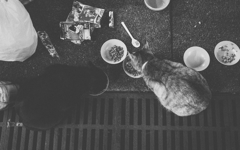 The mixture of wet and dry food for their diet.