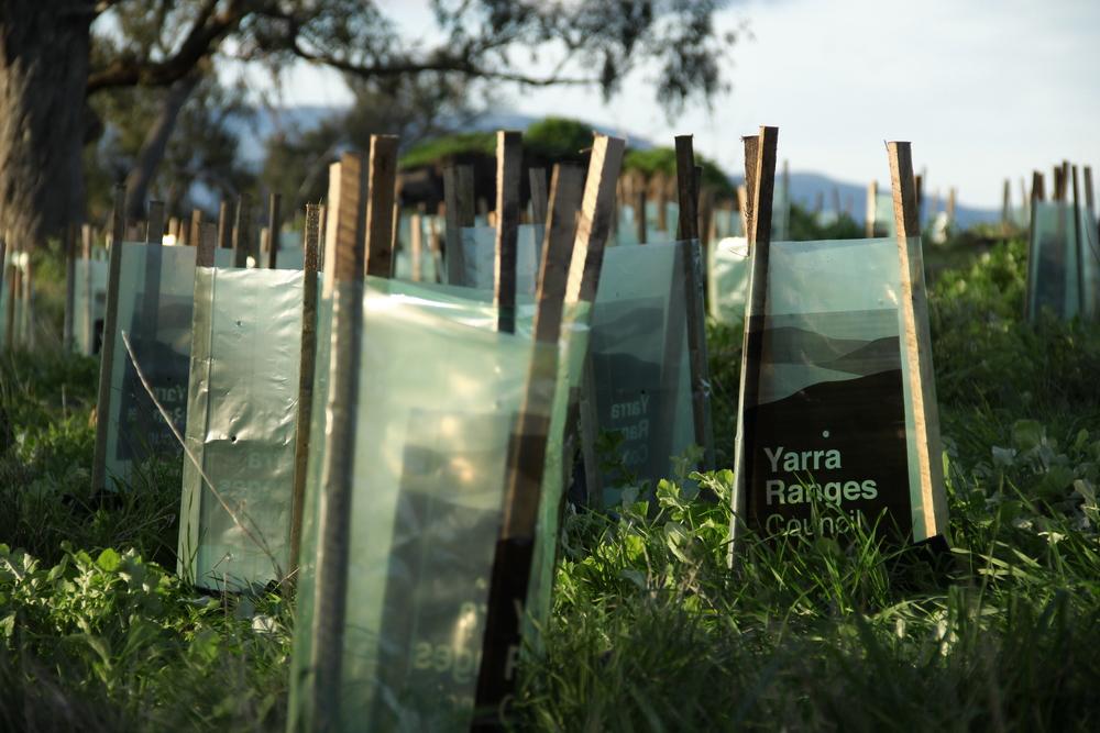 Planting. 花園還要種百多棵樹,我要做上圖的準備。他們另外網上找人來義務參與。