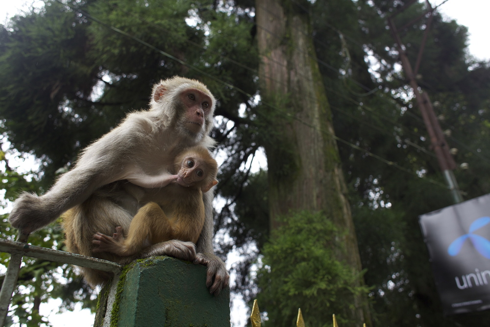 Darjeeling, India. 2010