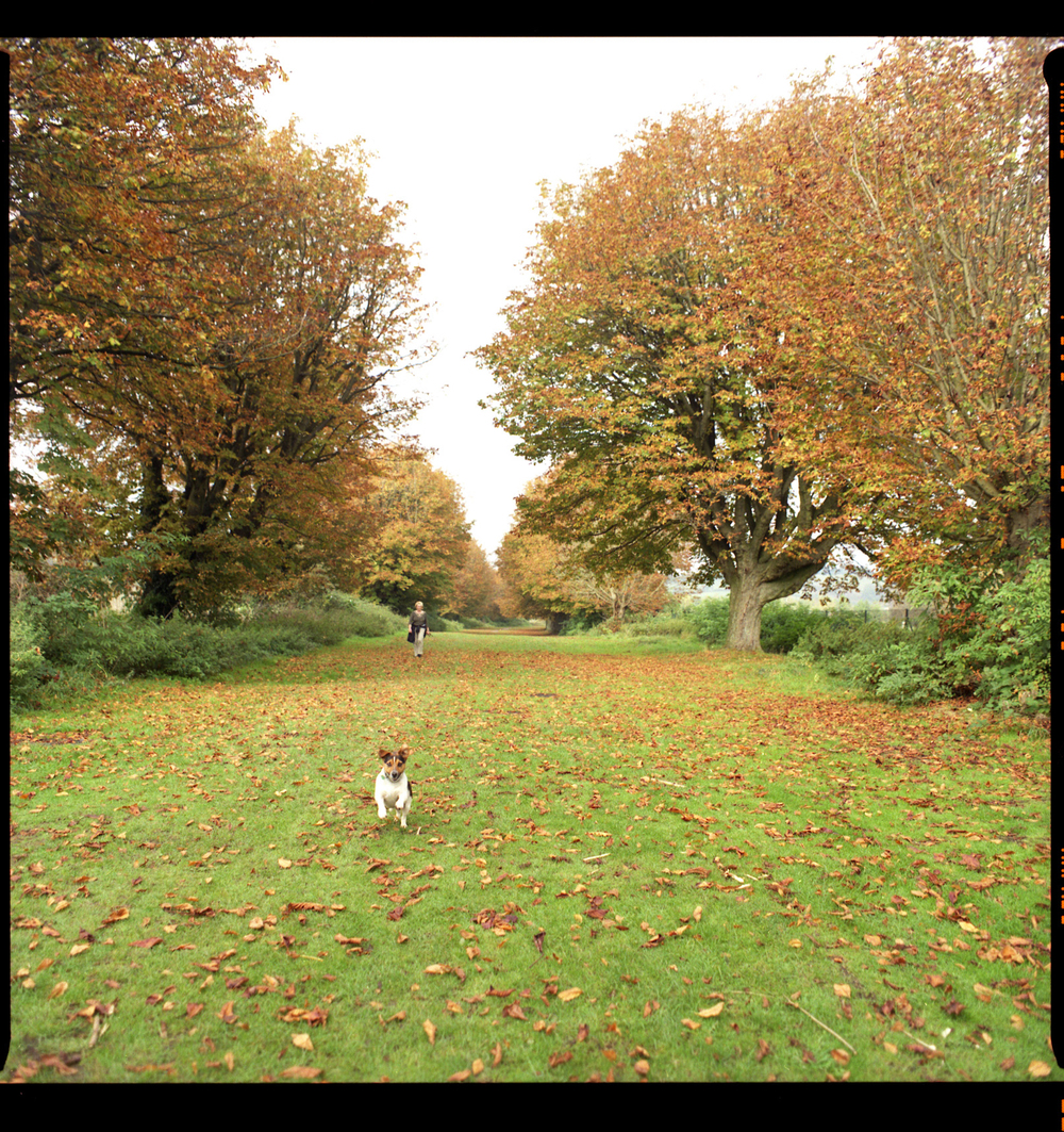 Dog walker, Wales. 2007