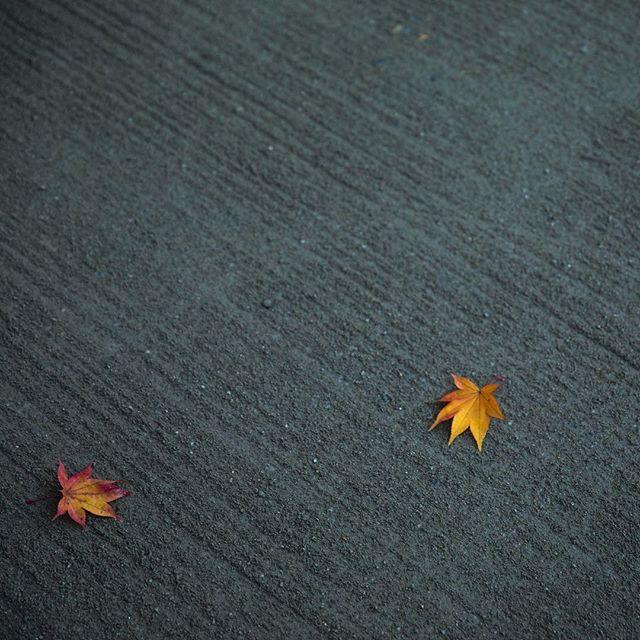 詩仙堂、秋景。 shisendo-Temple. photo by Mitsuyuki Nakajima 三度目の京都 #詩仙堂 #詩仙堂丈山寺 #三度目の京都 #京都紅葉 #紅葉#京都 #shisendo #autumnleaves #shisendotemple #kyototrip #kyoto