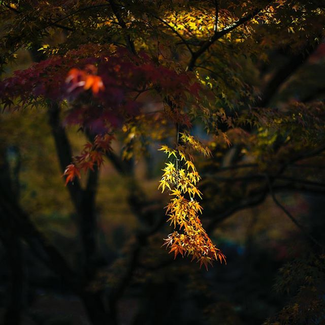 圓光寺、秋景。 Enkoji-Temple. photo by Mitsuyuki Nakajima 三度目の京都 #kyoto#kyototrip #autumnleaves #enkojitemple #enkoji#京都 #紅葉 #京都紅葉 #三度目の京都