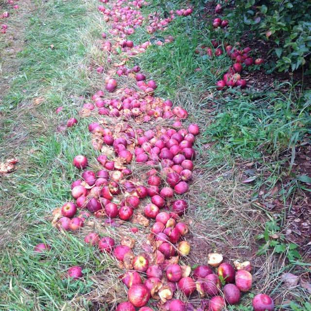 apple trail.