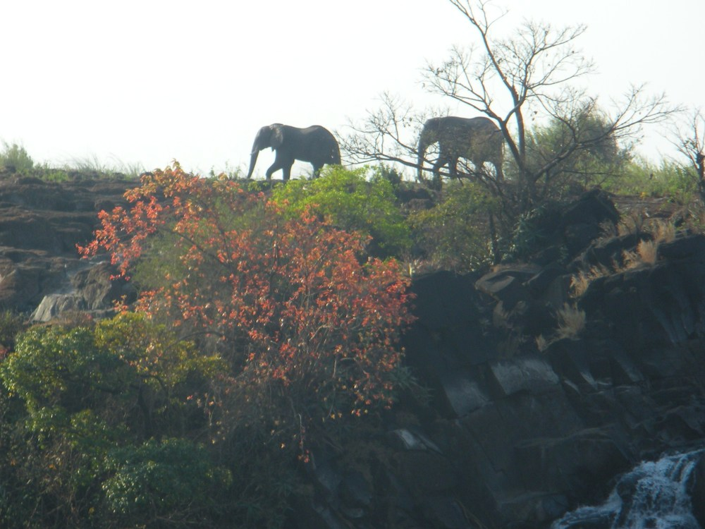 Elephants and flowers by the Victoria Falls