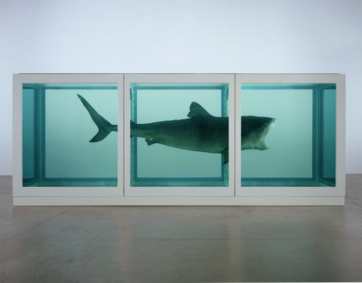 Damien Hirst,  The Physical Impossibility of Death , 1991