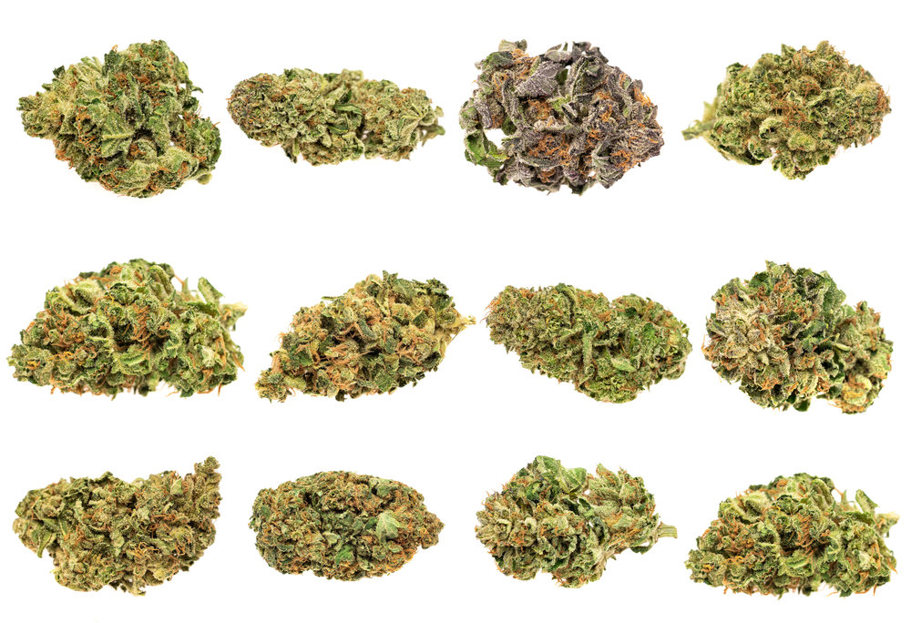 Buds Collage.jpg