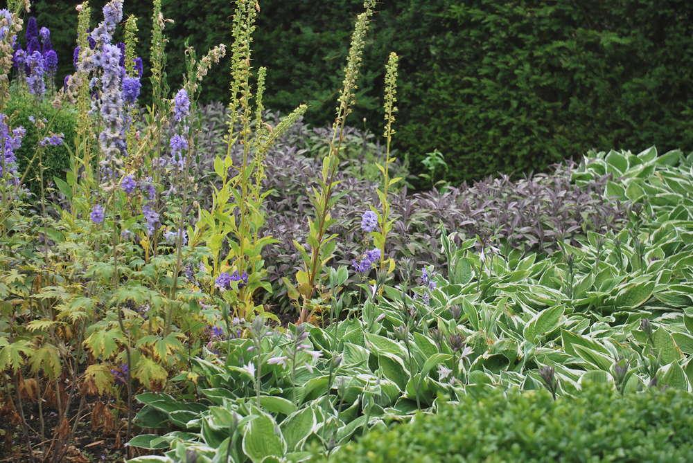 Heidis trädgård