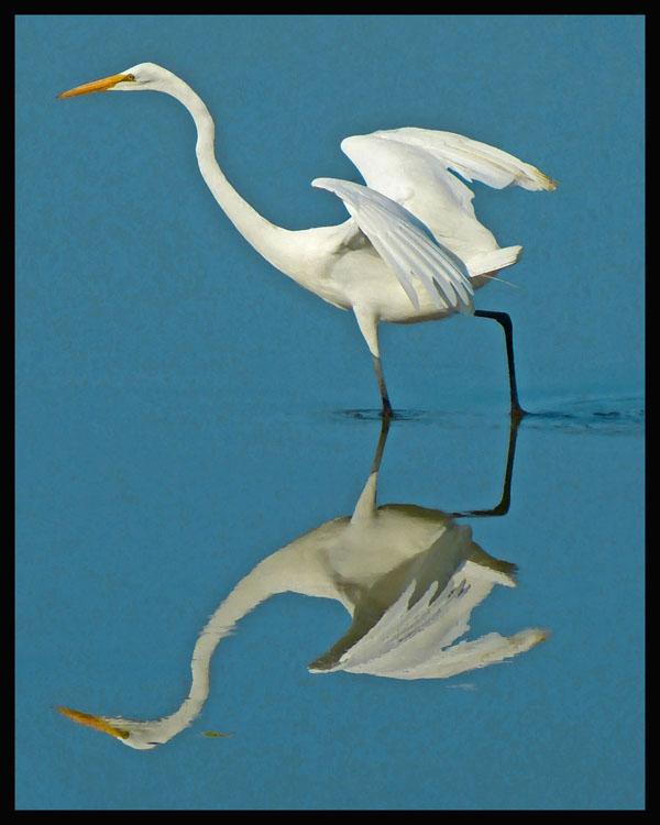 Great Egret Reflection