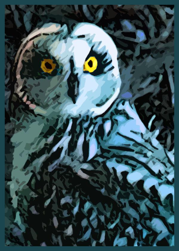 Blue Barred Owl