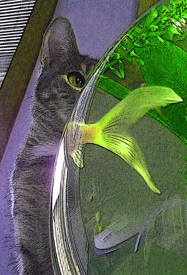 The Cat and the Goldfish