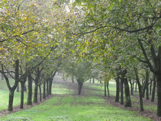 Walnut groves