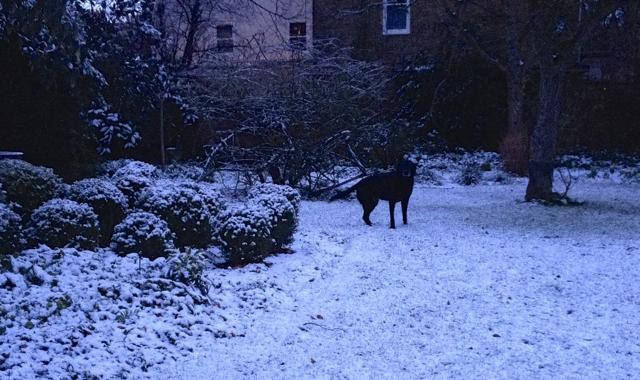 Ella enjoying the snow
