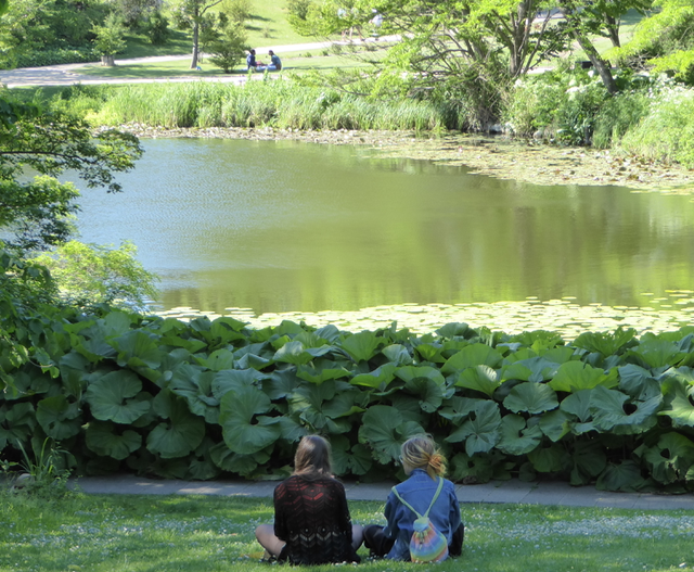 Enjoying the serenity of the Copenhagen Botanical Gardens