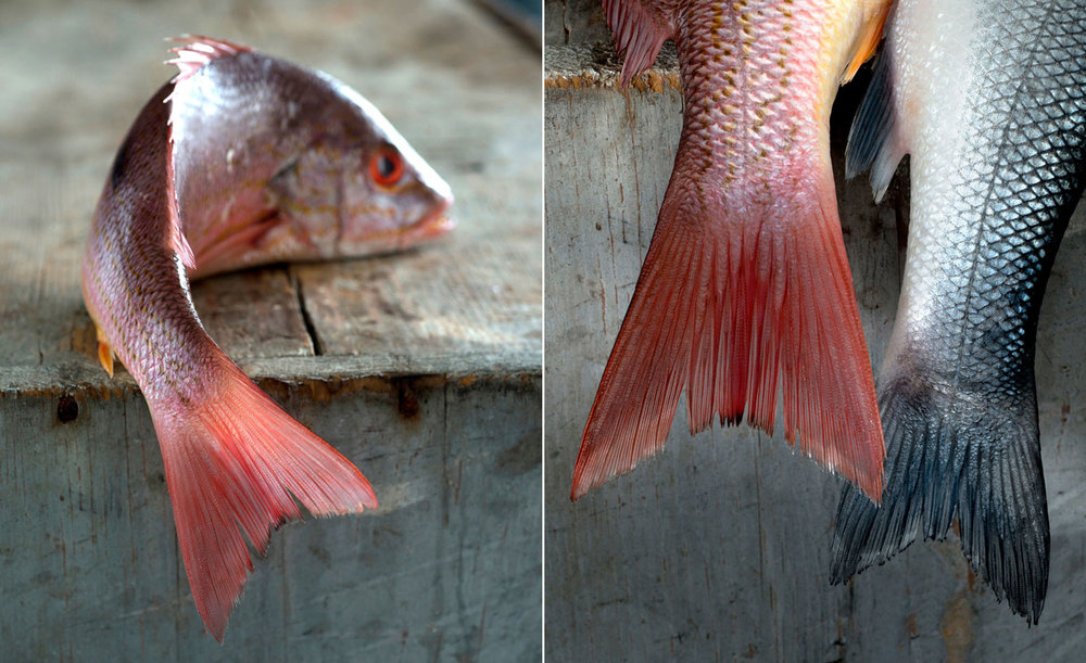 1red-snapper-B.jpg-web.jpg-spread.jpg