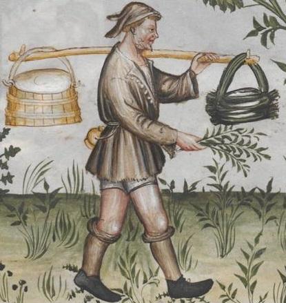 Tacuinum Sanitatis (Vienna MS), f61v