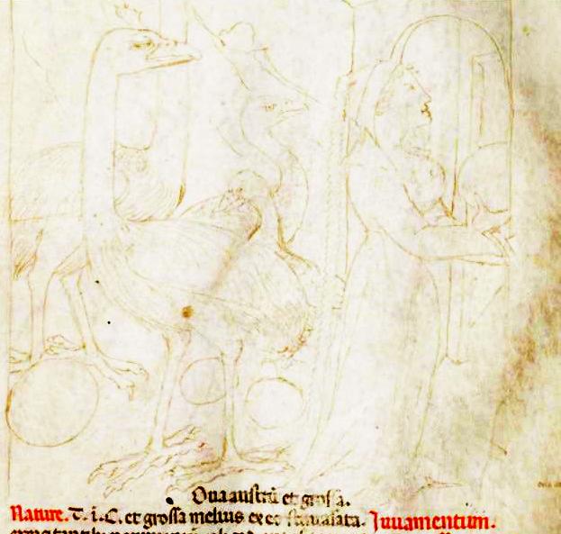 Tacuinum Sanitatis (Liege MS), f42r - Hood