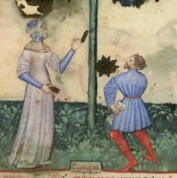 Tacuinum Sanitatis (Paris MS), f13v - Woman's hood