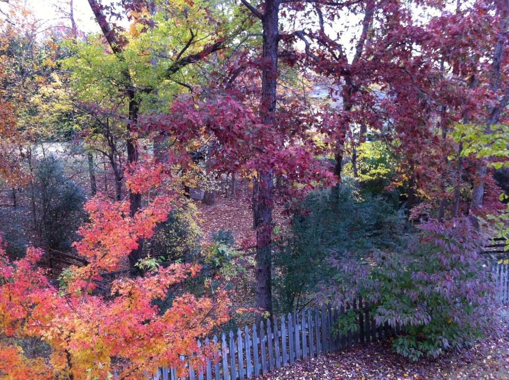 Backyard November 2013