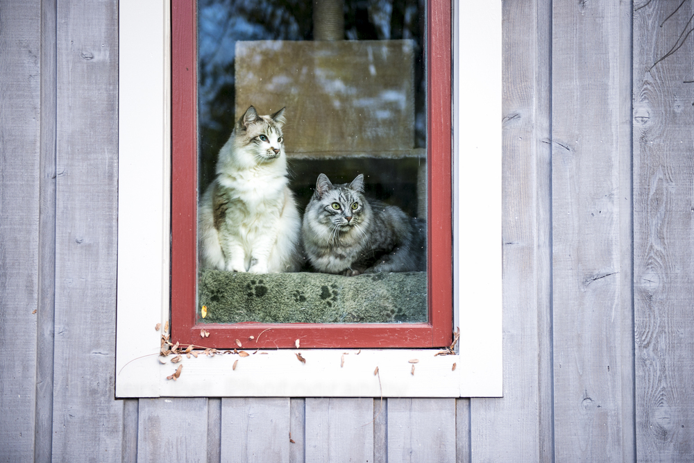 Grif & Oz in window frame-7.jpg
