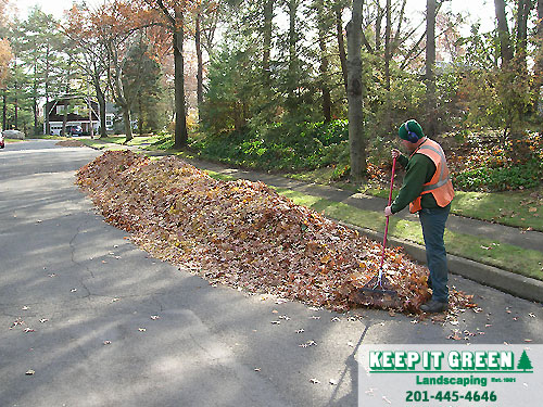 Landscape technician deposits leaves at curbside. Paramus, NJ 07652