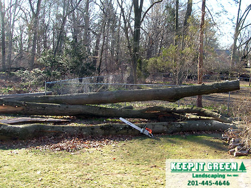 Tree branches removed from tree trunks. Glen Rock, NJ 07452
