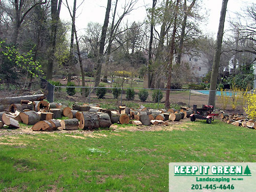Tree trunks cut into rounds prior to firewood splitting. Glen Rock, NJ 07452