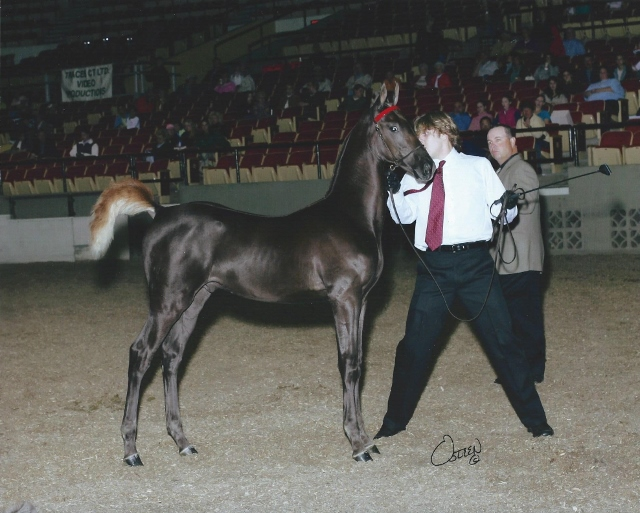 with Paul Healey - Wisconsin Futurity 2006