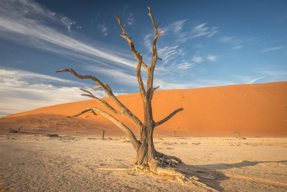 Dead Vlei Tree