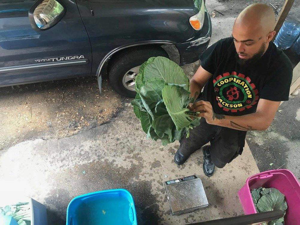 joe weighing greens 2018.jpg
