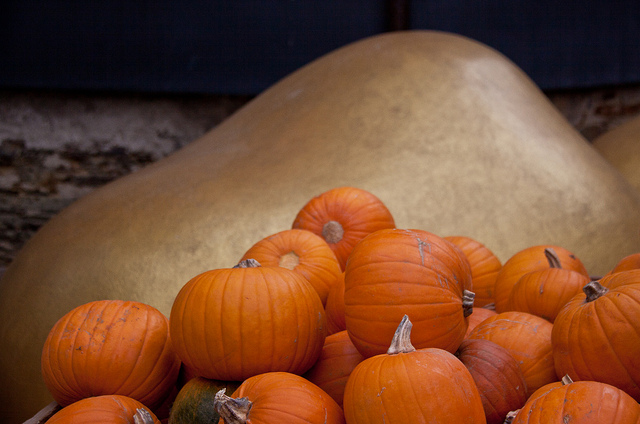 (Oktoberfest Pumpkins by Chris Goldberg)