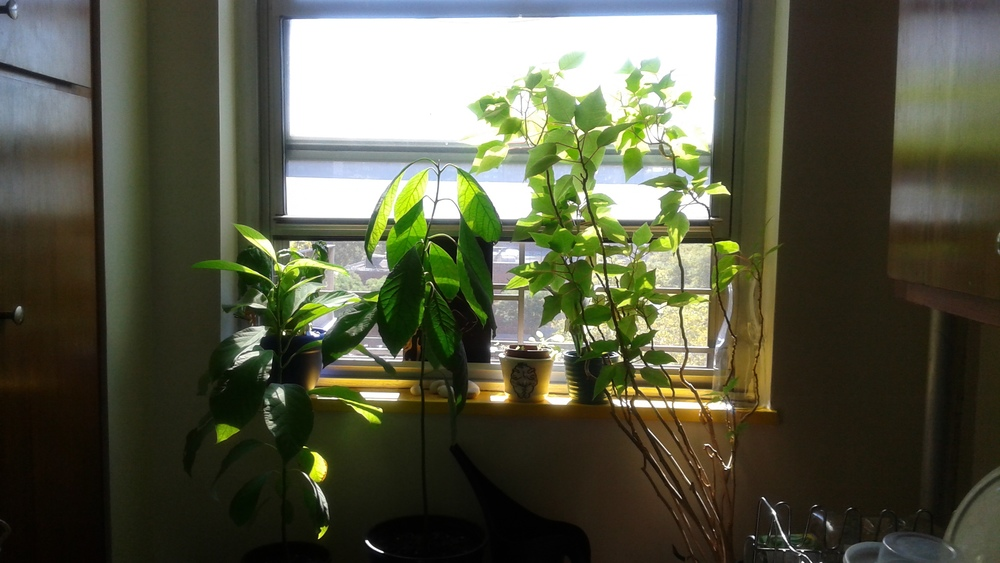 My plant babies all grown up.