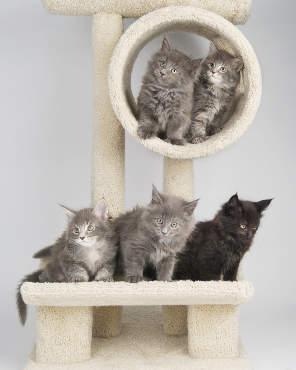Kittens (2).jpg