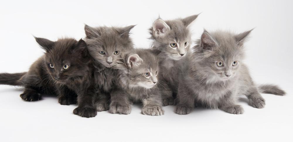 Kittens (1).jpg